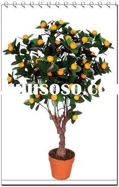 8 best kitchen lemon tree ideas images citrus fruits citrus trees orange trees. Black Bedroom Furniture Sets. Home Design Ideas