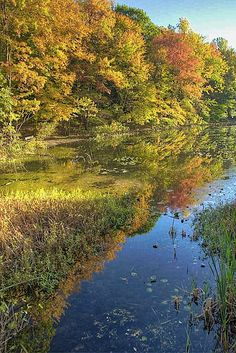 Autumn at Surprise Lake, Watchung Reservation, New Jersey . I live near here. Jersey Girl, New Jersey, Paramus Honda, Nj Beaches, Hiking Spots, Fall Pictures, Outdoor Photography, Travel Usa, Serenity