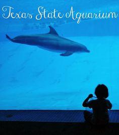 Family Trip to The Texas State Aquarium in Corpus Christi Texas