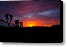 A Cholla Sunset  Stretched Canvas Print / Canvas Art By Saija  Lehtonen