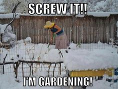 I'm tired of winter! Gardening in snow is becoming all too tempting. Starting my seedlings indoors, now! I'm tired of winter! Gardening in snow is becoming all too tempting. Starting my seedlings indoors, now! Seed Packaging, Screw It, Garden Club, Morning Humor, Winter Garden, Spring Garden, Dream Garden, Laugh Out Loud, Haha