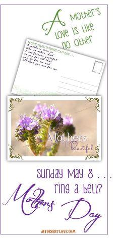 Beautiful Purple Wildflower Blooms Desert by MyDesertLoveDesigns