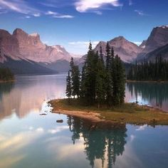 Fir trees on lake
