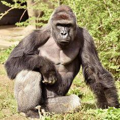 Zoológico de Cincinnati cierra cuenta en Twitter por ataques