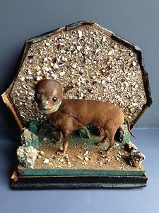 Antique Victorian Taxidermy Chihuahua Curio-i think it's so creepy to stuff a pet??