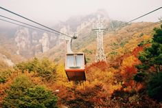 The Ultimate Guide to Daedunsan Mountain, with its suspension Cloud Bridge, spine-tingling stairway, cable car and brilliant South Korea fall colors! Autumn In Korea, Color Television, Yellow Tree, Jeju Island, Hidden Beach, Photo Essay, Fall Photos, American Idol, Perfect Photo