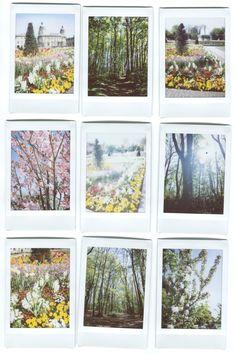 Kelly Harrison - Spring Polaroids