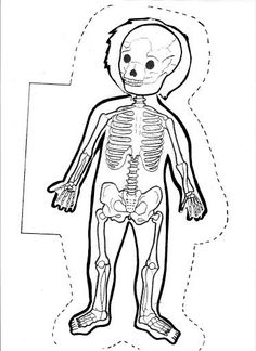 Large Human Body Contours for Display - SparkleBo Halloween Activities For Kids, Education Quotes For Teachers, Body Systems, My Themes, Educational Technology, Science And Nature, Teaching Kids, Human Body, Kindergarten