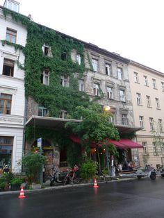 Efeu klammert sich an die Fassade des Altbaus im prenzlberg >> Berlin, Prenzlauerberg.