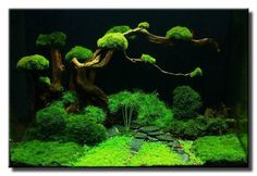 """Bonsai Garden"" by Vincent Tan  September 2009 Aquascape of the Month"