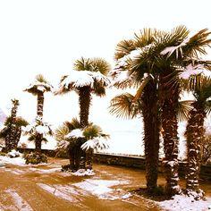 Montreux's lakeshore Fall Winter, Autumn, Switzerland, City, Beautiful, Mountains, Landscape, Fall, Cities