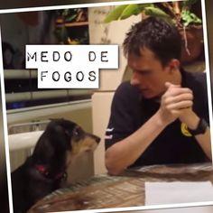 Alexandre Rossi e Estopinha dão dicas para cães que tem medo de fogos de...
