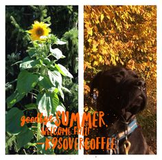 K9sOverCoffee | We are ready for cooler fall temps after one hot summer!!