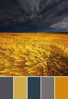 Ten Fall Color Combinations - County Road 407 - - With so many choices out there it's hard to know where to start when adding fall color to your home. Check out these ten fall color combinations to help! Color Schemes Colour Palettes, Room Color Schemes, Colour Pallette, Grey Palette, Yellow Color Schemes, Picture Color Schemes, Complimentary Color Scheme, Gold Color Scheme, Room Paint Colors