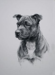 Staffordshire Bull Terrier dog drawing Limited Edition fine art print H Irvine