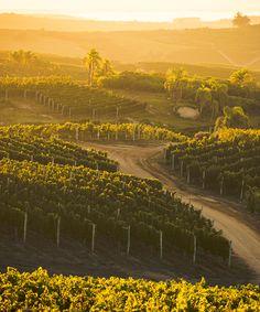 Visit Uruguay's Bodega Garzón winery, owned by Argentinian oil tycoon Alejandro Bulgheroni.