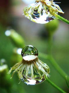 Amazing macro drops