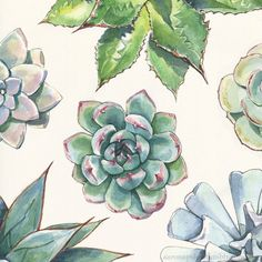 Succulent print design - Agave, Echeveria, and Graptopetalum species in Watercolor and Ink. I like making these patterns but not sure what to do with them. Any ideas?