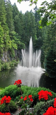 Butchart Gardens in Brentwood Bay (near Victoria) on Vancouver Island in British Columbia, Canada - Photo: Michele R. Beautiful World, Beautiful Gardens, Beautiful Places, Beautiful Gorgeous, Amazing Gardens, Amazing Places, Covent Garden, Beautiful Waterfalls, Beautiful Landscapes