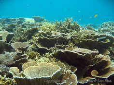 ボルネオ島コタキナバルのサンゴ礁