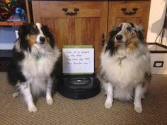 One of us pooped on the floor…. The same day that the Roomba ran! —Murry and Jake