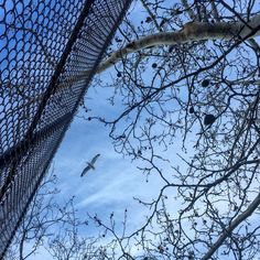 An awesome Virtual Reality pic! .... To have the #heart of a #bird and find #freedom and beauty in the mundane.  To #flyfree #fortheloveofit like a #seagull in a #Brooklyn #Wintersky through the #Wintertrees ... The #cityfences cannot own the divide.... #perspective the #spacebetween that place where the  #concretejungle touches #mothernature always #inspires me .. #natureversusnurture #observe the #contrast  #morningmeditation #Jah  #VirtualReality by virtue_elle check us out…