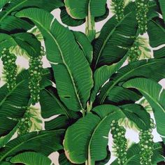 #DorothyDraper Green Brazillance Palm Leaf Pattern Wallpaper available in #TheGreenbrier Online Store. http://store.greenbrier.com