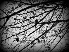extrangótica: el invierno Texto y Foto de Susana Inés Nicolini.