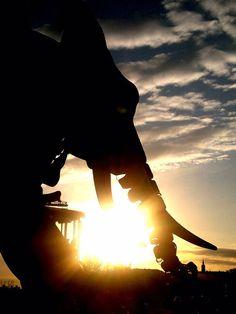 Mon éléphant à moi - Machines de l'Île (Nantes, Loire-Atlantique, FRANCE)