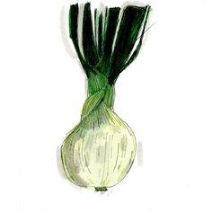 candy onion by Elizabeth Graeber