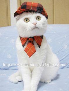 When cat ties up <3