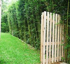 Beneficios de los cercos vivos Cerca Natural, Design Consultant, Garden Plants, Planting Flowers, Swimming Pools, Bamboo, Places To Visit, New Homes, Outdoor Structures