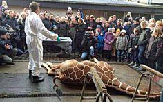 Non solo la giraffa Marius: le stragi di animali negli zoo europei