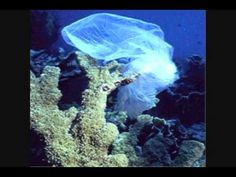 Plastic Bags are everywhere and not going away anytime soon! My Friend Cristen has an idea, she likes the idea so much that she travels to o. Life Under The Sea, Help The Environment, She Likes, It's Easy, Ecology, Join, How To Plan, People, Inspiration
