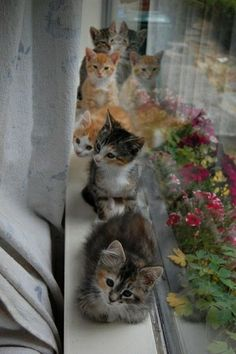 How much is that kiiiiitty in the window, the one with the wiiiiiiggily tail...