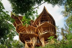 Woman Quits Job to Build Sustainable Bamboo Homes in Bali. Elora Hardy, raised in Bali, knows about bamboo's unique qualities firsthand. After working for years in the concrete jungle of New York. Bamboo House, Bamboo Tree, Bamboo Palace, Giant Bamboo, Bamboo Roof, Bamboo Architecture, Sustainable Architecture, Sustainable Houses, Sustainable Design