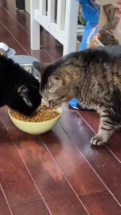 sorry for my big mouth. i am hungry Funny Cute Cats, Funny Cats And Dogs, Cute Kittens, Cute Funny Animals, Cats And Kittens, I Love Cats, Crazy Cats, Cool Cats, Gato Gif