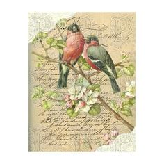 photo ❤ liked on Polyvore featuring backgrounds, bird and vintage
