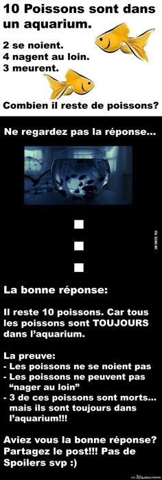 - Aquarium - Une question ULTRA simple que personne n'est capable de répondre correctement A ULTRA simple question that no one is able to answer correctly. Funny Quotes, Funny Memes, Some Jokes, Rage, Image Fun, Hilario, Einstein, Funny Posts, Dumb And Dumber
