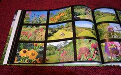 Photos du jardin réunies en album