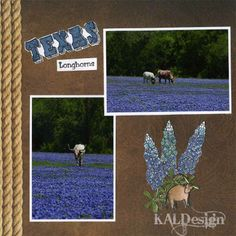 Texana Designs page layout by DTM Karen Lambert using our Texana Designs Jam'n Bluebonnet (framed) TEXAS (KALDesigns) and Longhorns (word) stamps.