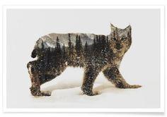 Artic Lynx as Premium Poster by Andreas Lie   JUNIQE