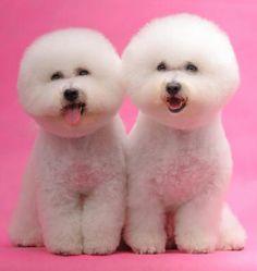 twins!