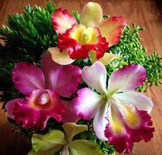 Flowers+ - コミュニティ - Google+