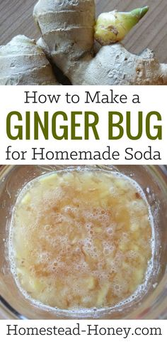 ginger bug is a natural ferment that can be used as a starter culture for homemade sodas, ginger ale, or root beer. Using just three ingredients - organic ginger, sugar, and water - I'll teach you how to make a ginger bug at home. Kombucha, Homemade Ginger Ale, Ginger Ale Recipe, Homemade Root Beer, Recipes With Ginger Root, Homemade Rootbeer Recipe, Ginger Uses, Homemade Jelly, Ginger Bug