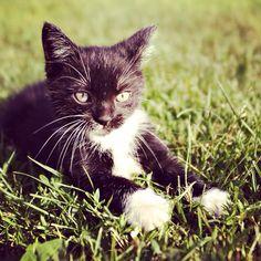 Kot. Cat. She. Kitten.