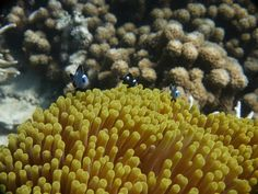 Coral, Madagascar | Dive, travel and volunteer for Marine Conservation at www.frontiergap.com | #dive