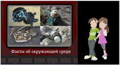 Видеоурок «Твой вклад в защиту окружающей среды»