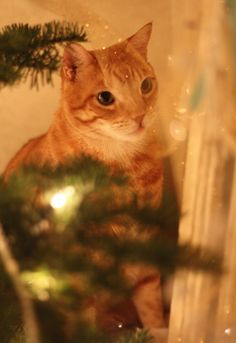 Our Cat Under The Christmas Tree Gallery