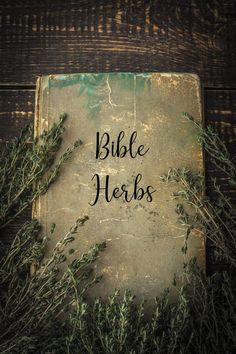 This article discusses the usefulness of Bible herbs and how they can still help maintain health and wellness in modern times. Holistic Medicine, Herbal Medicine, Natural Home Remedies, Herbal Remedies, Rheumatoid Arthritis Symptoms, Spiritual Wellness, Rose Of Sharon, Natural Health Tips